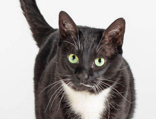 CHOOSING YOUR PET – CATS